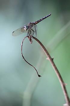 Dragonfly by Jim Clark