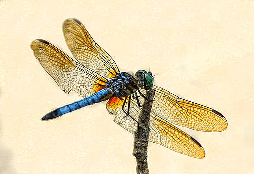 Dragonfly by Jim Moore