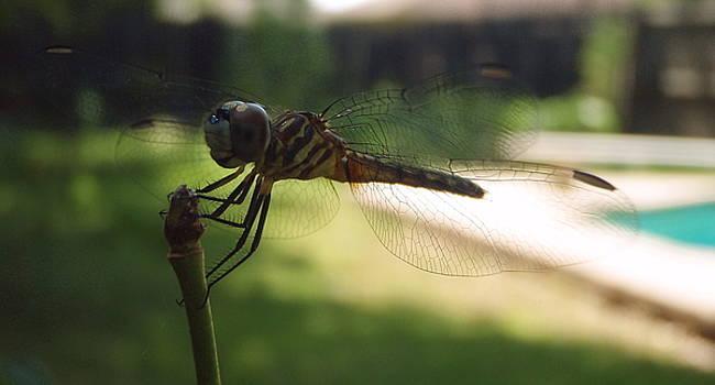 Dragonfly by John Derrick