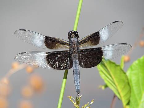 Dragonfly King by Ginger Wemett