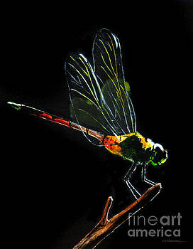 Dragonfly by Monica Carrell