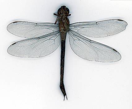 Muyiwa OSIFUYE - DragonFly
