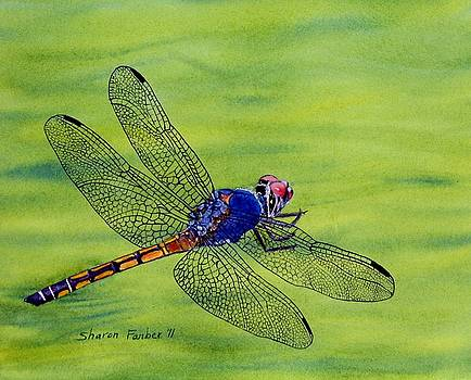 Dragonfly on Green by Sharon Farber