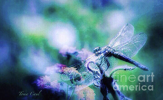 Dragonfly on Lantana-Blue by Toma Caul