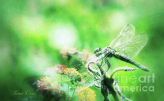 Dragonfly on Lantana-Green by Toma Caul