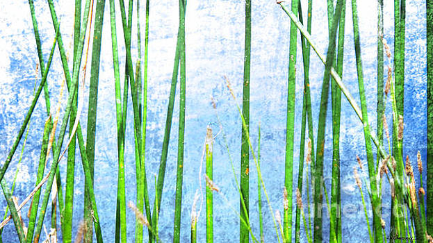 Dragonfly on Reeds by Monica Carrell