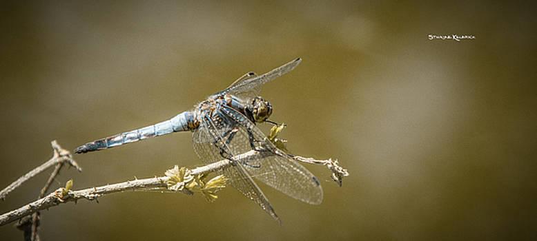 Dragonfly on the spot by Stwayne Keubrick