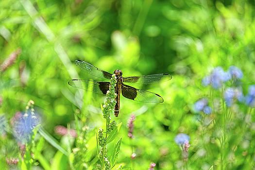 Dragonfly peeking at me by Ronda Ryan