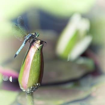 Dragonfly Perched by Scott Wyatt
