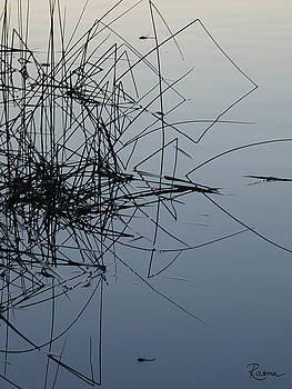 Rasma Bertz - Dragonfly Reflections