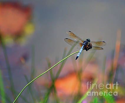 Dragonfly Resting Near The Pond by Kerri Farley