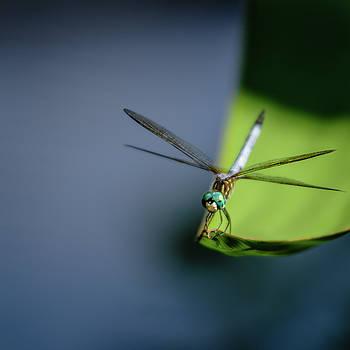 Dragonfly by Scott Wyatt