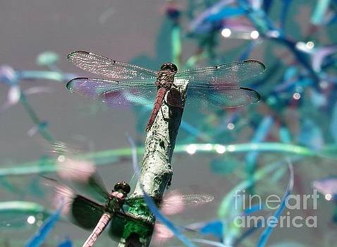 Dragonfly Tag by Charleen Treasures