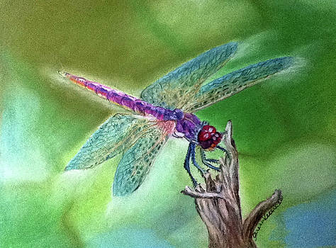 DragonFly by Teresa Vecere