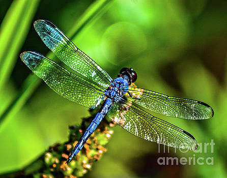 Dragonfly by Trish Casey-Green