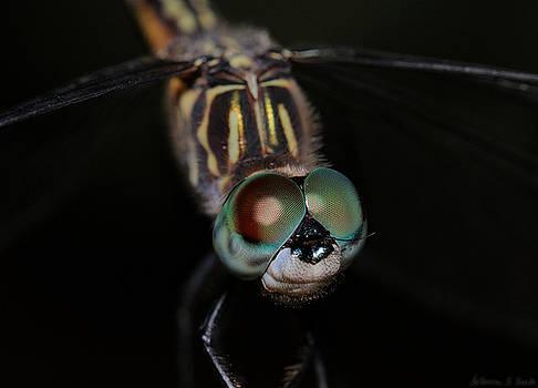 Warren Sarle - Dragonfly