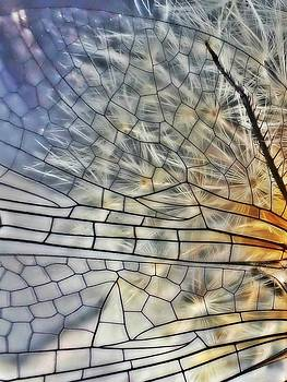 Dragonfly Wing by Lorella Schoales