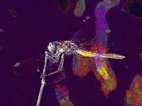Dragonfly Wings Beauty Insect  by PixBreak Art
