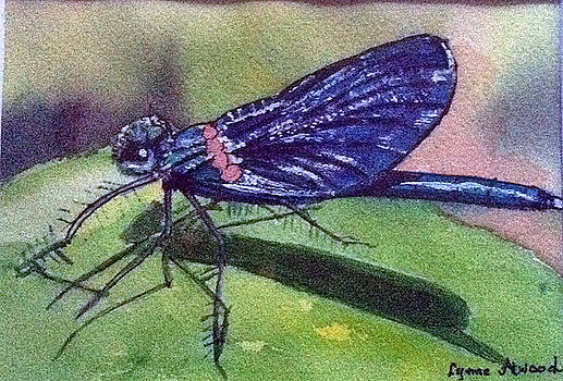 Dragonfly with shadow by Lynne Atwood