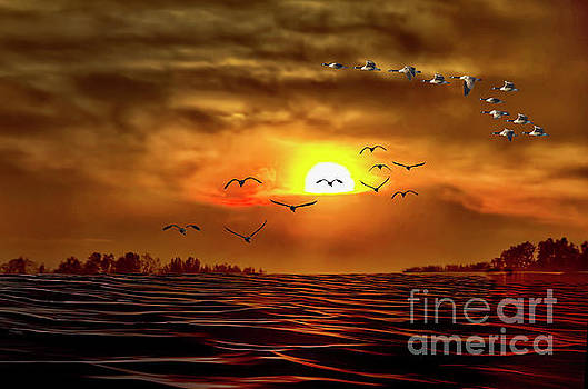 Drama in the Sky by Maggie Magee Molino