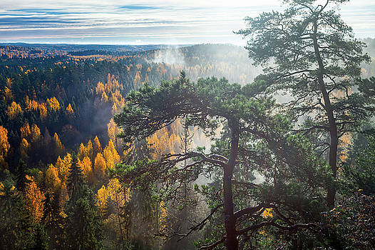 Dramatic Autumn Forest with trees on foreground by Teemu Tretjakov