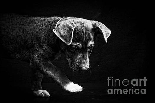 Dramatic Black and White Puppy Dog by Edward Fielding