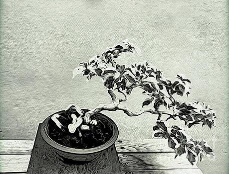 Onedayoneimage Photography - Bonsai Lovers Gift - Dramatic Bonsai