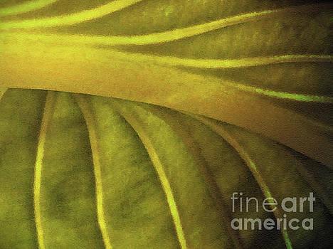 Dramatic Leaf by Jacklyn Duryea Fraizer