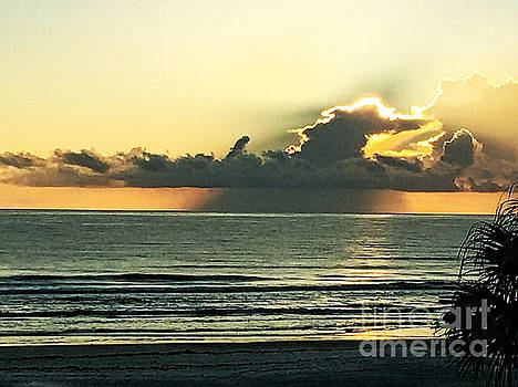 Dramatic Morn by Donna Cain