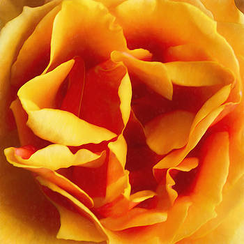 Dramatic Yellow Rose by Bonnie Follett