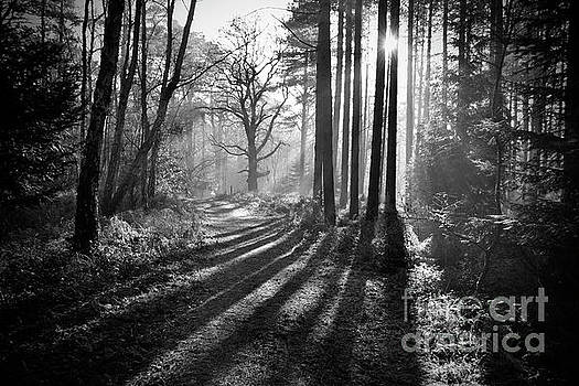 Drawn Back To The Light by Jon Clifton