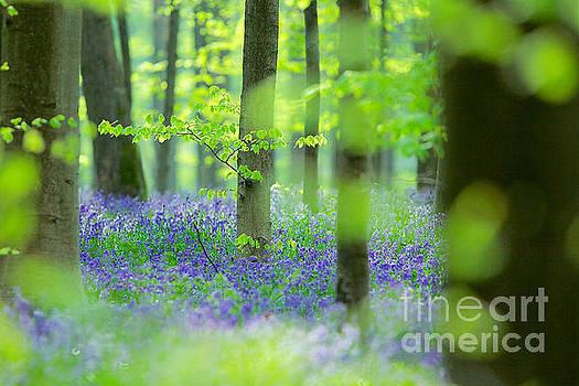 Dream forest by Corne Van Oosterhout