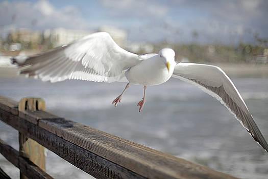 Dream Gull  by Juan Correa