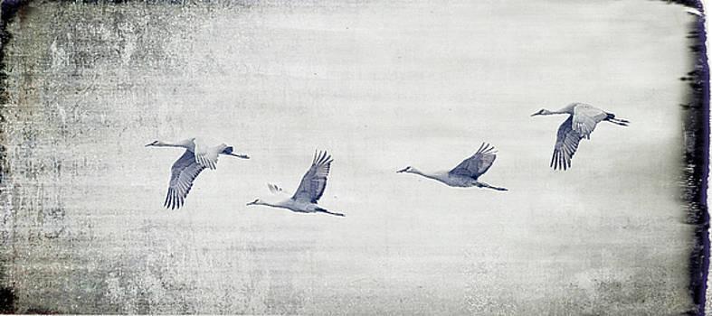Dream Sequence by Sheldon Bilsker