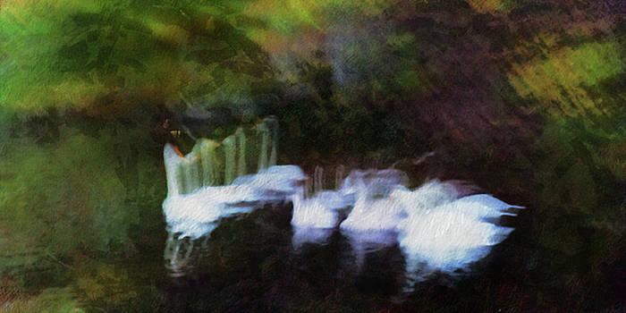 Dream Swans by Pekka Liukkonen