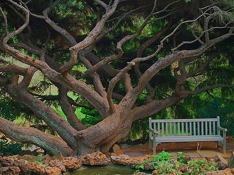 Dream Tree by Andrew Kazmierski