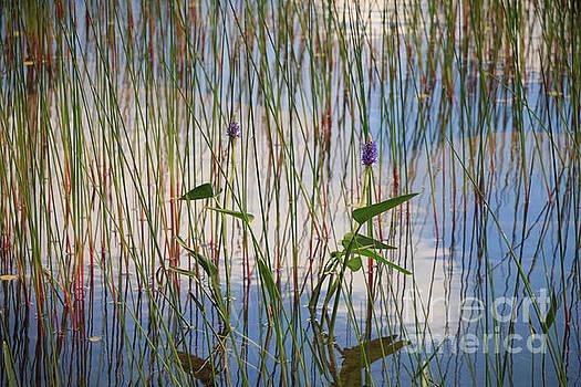 Dreaming of Summer by Elizabeth Dow