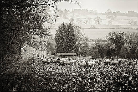 Dreaming Pastoral by Wendy Chapman