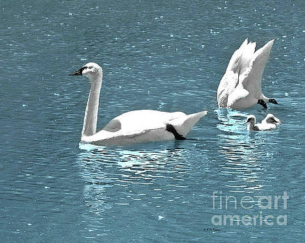 Dreaming With Swans by Kathy M Krause