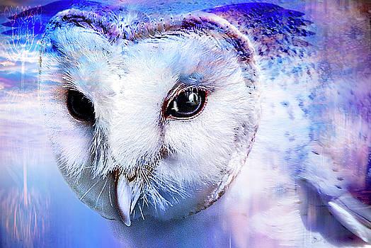 Dreams Of Flight by Wendy Slee