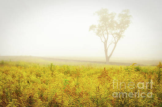 Dreams of Goldenrod and Fog by Melissa Fague