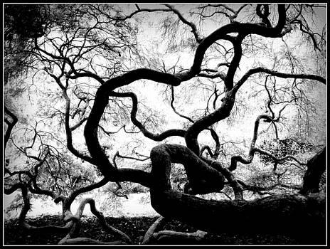 Dreamscape by Jen Whalen