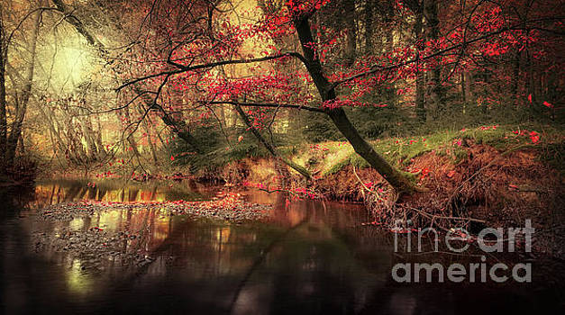 Svetlana Sewell - Dreamy Autumn Forest