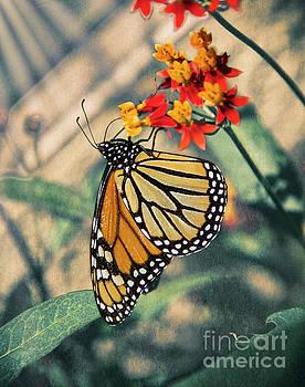 Dreamy Butterfly by Mariola Bitner