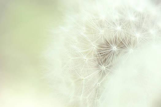 Dreamy Dandelion by Debi Bishop