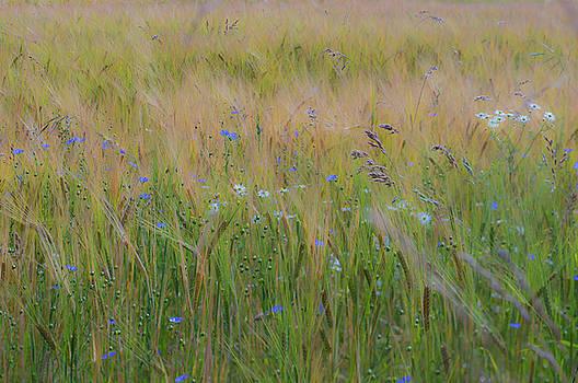 Ian Thompson - Dreamy Meadow