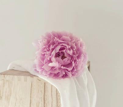 Kim Hojnacki - Dreamy Pink Peony