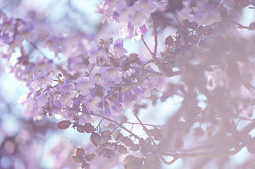 Dreamy Purple. Paulownia Tomentosa 1 by Jenny Rainbow