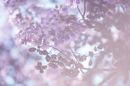 Dreamy Purple. Paulownia Tomentosa by Jenny Rainbow