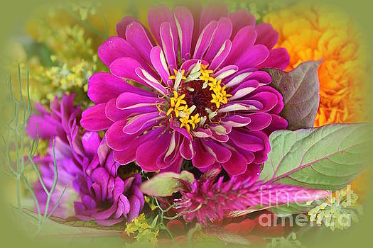 Zinnia Dreamy in  Pink  by Dora Sofia Caputo Photographic Design and Fine Art
